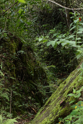 Coroico trail, Yungas, elev. 1900 m. 14 January 2012. Photographer: Lars Andersen